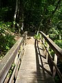 Gold Head Branch SP ravine path04.jpg