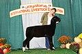 Grand Champion Natural Colored Ewe (31271958288).jpg