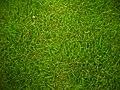 Grass 01.jpg