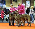 Great Dane Breeding Group in Riga.JPG