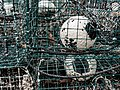 Green crab traps with white buoys.jpg