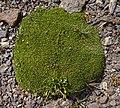 Green plant 2.jpg