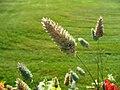 Greenplant8.jpg