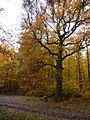 Grenzbaum Heul-Eiche.jpg
