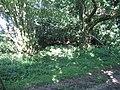 Grim's Ditch near Down Farm, Chilmark - geograph.org.uk - 877773.jpg