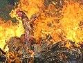 Gripe-aviar.jpg
