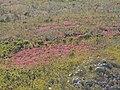 Grootvadersbosch Nature Reserve PICT3781.JPG