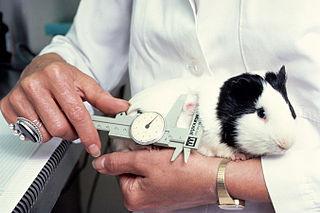 Pokusy sa robia často na zvieratách