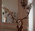 Gyulaj - Fehér '69 Fallow Buck, Hungarian Hunting Museum, Hatvan, 2020-08-11.jpg