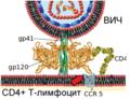 HIV Membrane fusion panel rus 2.png
