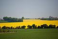 Hackpen Hill, Wiltshire, England, 23 April 2011 - Flickr - PhillipC (1).jpg