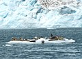 Harbor Seals (20226064556).jpg