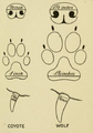 Harding (1909) Coyote vs Wolf.png