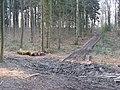 Harton Hollow Wood - geograph.org.uk - 388228.jpg