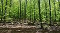 Hedbokskog inom Åminne Naturreservat (också kallat Blåsippekullens naturreservat).jpg
