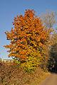 Herbstlicher Baum.jpg