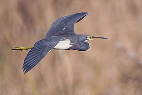 Description de l'image Heron - natures pics.jpg.