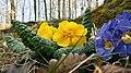 Hessen, Steigerts, Blume.jpg