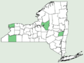 Hieracium marianum NY-dist-map.png