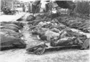 Victims of a massacre with their hands bound in burial area near Waegwan, Korea.