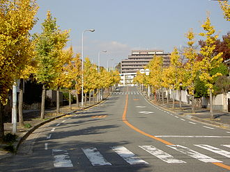 "Nickname - Hirakata-shi, Osaka, Japan. Nickname road ""Ginkgo street"""