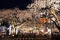 Hitachi Sakura Festival, Ibaraki 24.jpg