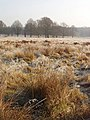 Hoar frost on grass near trees, Richmond Park - geograph.org.uk - 1102687.jpg