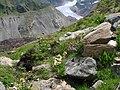 Hochsommer am Tiroler Gepatschgletscher - panoramio.jpg