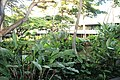Honolulu Airport, Hawaii - panoramio (1).jpg