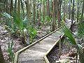 Hontoon Island State Park bwalk02.jpg