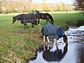 Horses at Dockens Water - geograph.org.uk - 608050.jpg