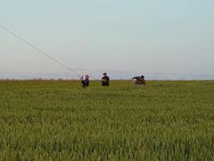 Hot air balloon212.JPG