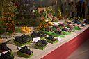Huldenbergse feesten 2015 druiven