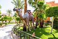 Hurghada, Qesm Hurghada, Red Sea Governorate, Egypt - panoramio (268).jpg