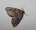 IKAl 20101222 Moth.jpg
