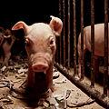 Igualdad Animal - 43 (7139533545).jpg