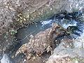 Imaculado Coração de Maria, Funchal - 24 Jan 2012 - SDC15029.JPG