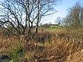Industrial Site, Blackrig. - geograph.org.uk - 90403.jpg