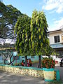 Infanta,Pangasinanjf0215 40.JPG