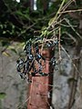 Insects resting in twigs 2.jpg