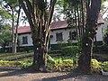 Instituto Butantã - Árvores de propriedade do Complexo do Instituto - Com lacre, para garantir sua preservação e Cuidados - 5F5050B1-413C-4C79-ABF2-CC90D45C171B.jpg