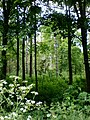 Invitation to the forest^ - geograph.org.uk - 1357471.jpg