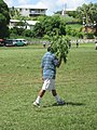 It is so hot during the rugby game that the linesman carries a branch to get some shade - panoramio.jpg
