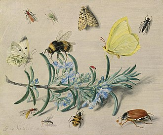 Jan van Kessel the Elder - Image: Jan van Kessel (I) A still life study of insects on a sprig of rosemary with butterflies, a bumble bee, beetles and other insects
