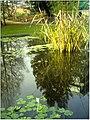 January Frost Botanic Garden Freiburg - Master Botany Photography 2014 - panoramio (22).jpg