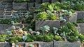 Jardín Botánico Mexico City 79.jpg