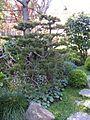 Jardín Japonés de Montevideo 14.JPG