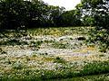 Jerichow-Elbauen mit Frühlingswiese.jpg