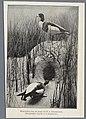 Johannes Eliza Rombouts (1843-1913), Afb 000395000309.jpg