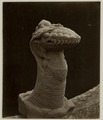 KITLV 28239 - Isidore van Kinsbergen - Naga sculpture at the residency in Kediri - 1866-12-1867-01.tif